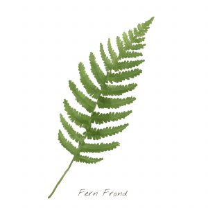 blue british fern