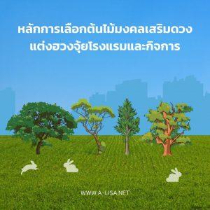 หลักการเลือกต้นไม้มงคลเสริมดวงแต่งฮวงจุ้ยโรงแรมและกิจการ